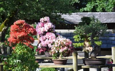 Bonsaigarten Seeboden