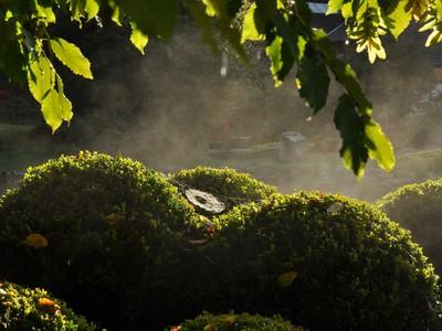 Harmonie im Garten