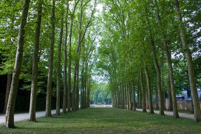 Wald Versailles