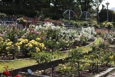 Rosen Garten Charlottenfels