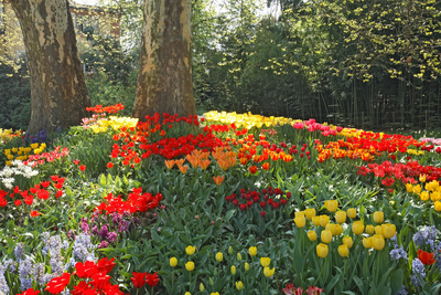 Blumeninsel Mainau 3.jpg