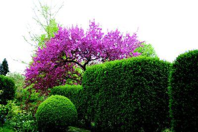 Cornelias Garten