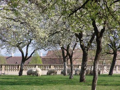 Frühling Schloss Hof