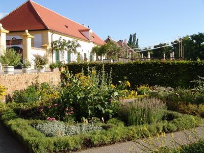 Kräutergarten Erkältung Schloss Hof