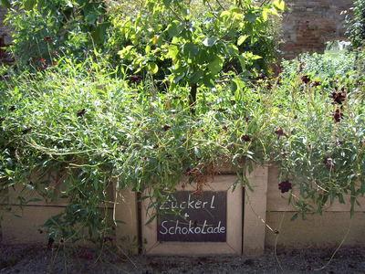 Schloss Hof, Garten Kräuter Zuckerl-Schlokolade