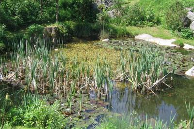 Südgarten Biotop