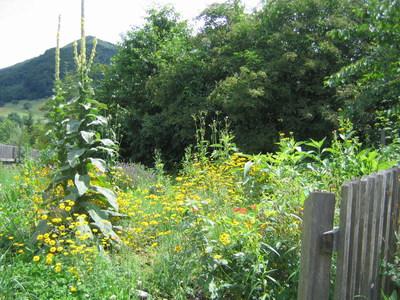 Mostiniumdach als Garten