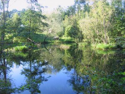 Steinschaler Teich