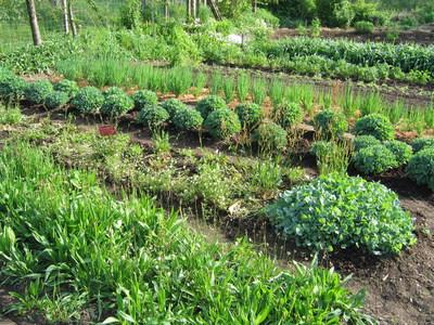 Gemüse- und Kräutergarten