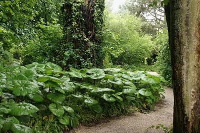 Botanischer Garten in Linz, by GardenTraveller, flickr.com