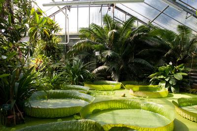 Botanischer Garten Linz, by Jakob Hürner, flickr.com