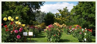 Botanischer Garten Linz, by Klasse im Garten, flickr.com