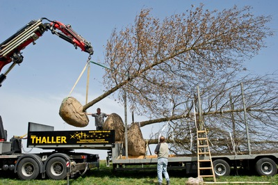 Großbäume, (c) Loidl Peter