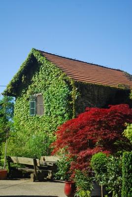 Grüne Wände, (c) Baumschule Ecker