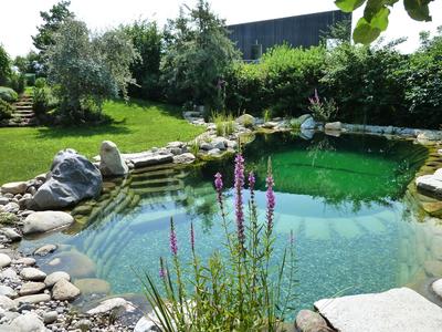 Harmonischer Naturpool, (c) Zenz Gärten