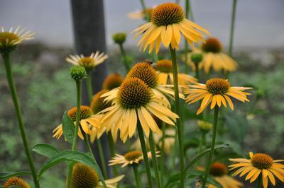 Blumen Plettig, (c) Blumen Plettig