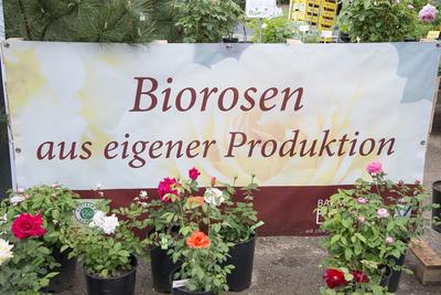(c) Baumschule Ecker