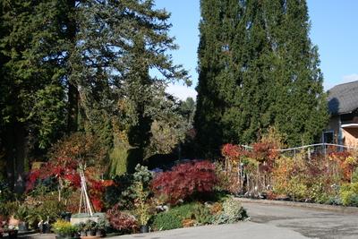 Gartengestalter Ledolter (c) Baumschule Ledolter
